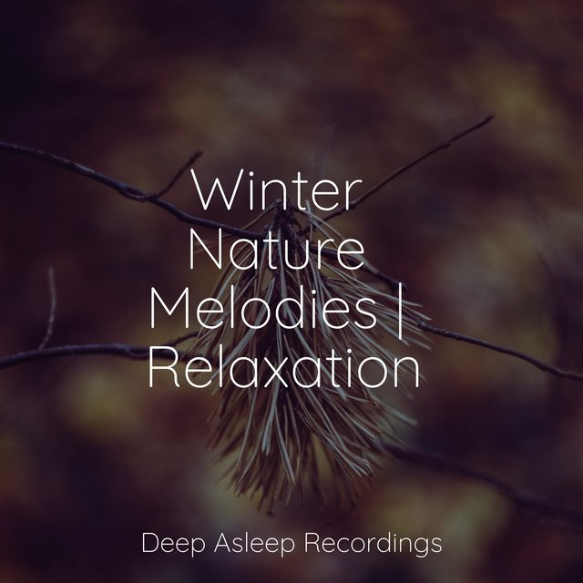 Winter Nature Melodies | Relaxation