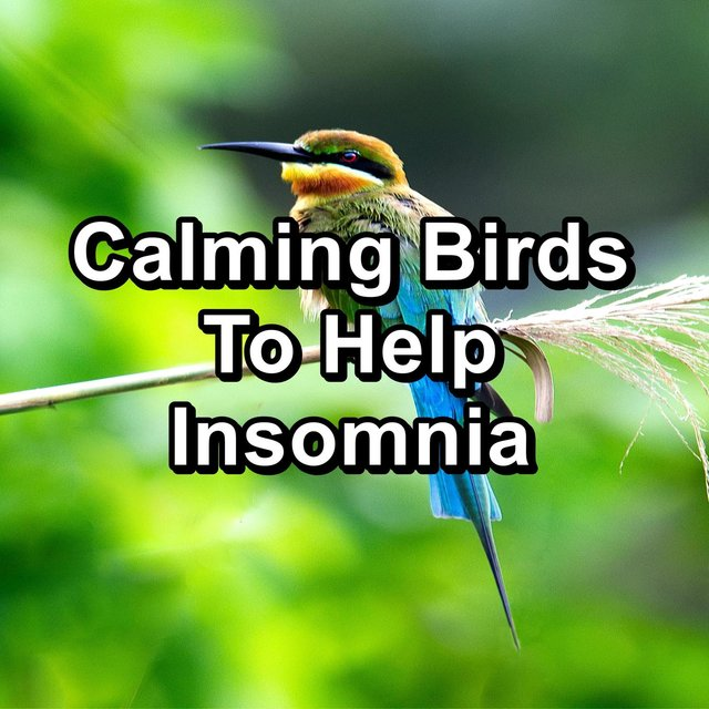 Calming Birds To Help Insomnia