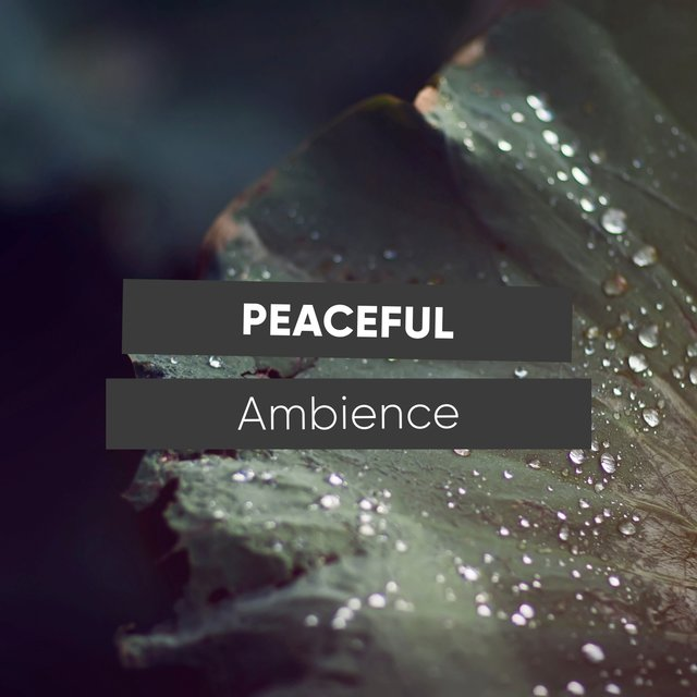 # 1 Album: Peaceful Ambience
