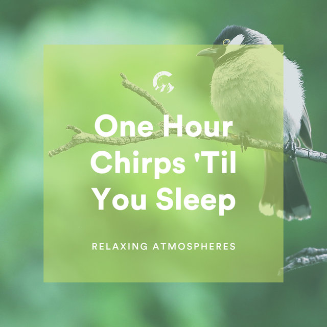 1 Hour Chirps 'Til You Sleep