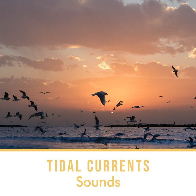 Bohemian Tidal Currents Sounds