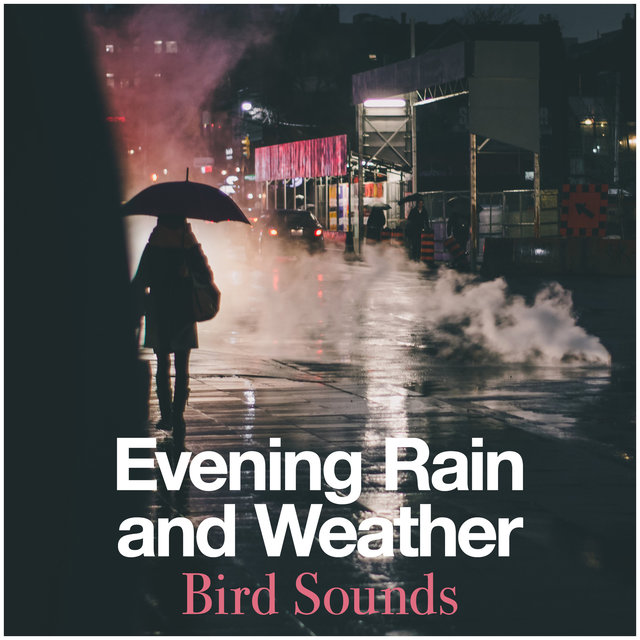 Evening Rain and Weather