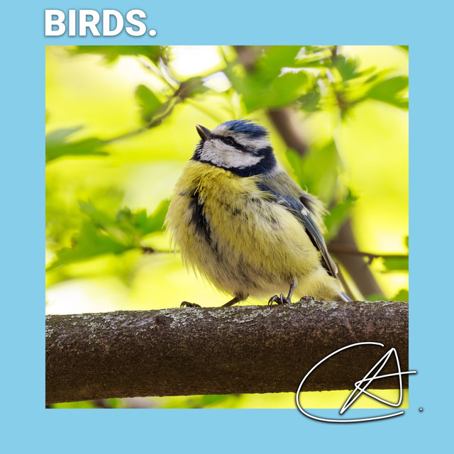 Bird Sounds to Help You Relax
