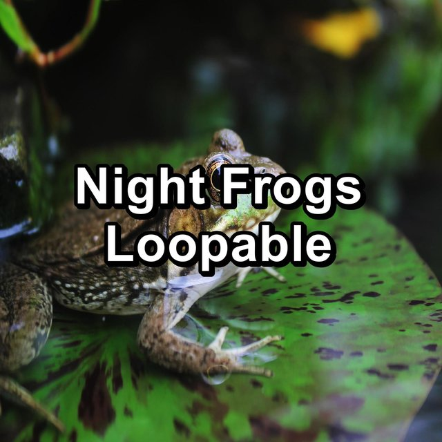 Night Frogs Loopable
