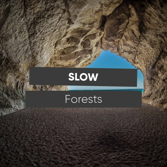 # Slow Forests