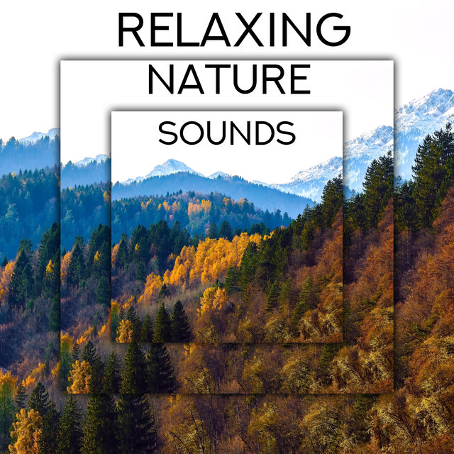 Relaxing Nature Sounds - Ambient New Age Music, Keep Calm with Nature Sounds, Pouring Rain, Woodland Escape, Bird Calls, Blue Skies, Healing Therapy