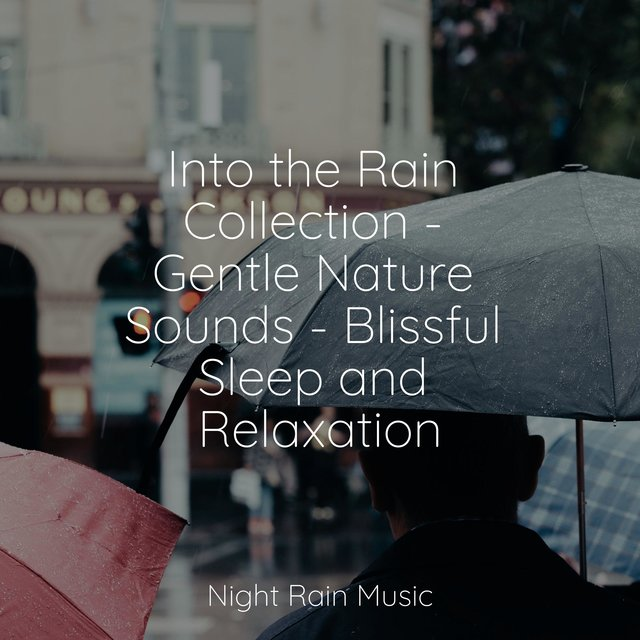 Into the Rain Collection - Gentle Nature Sounds - Blissful Sleep and Relaxation