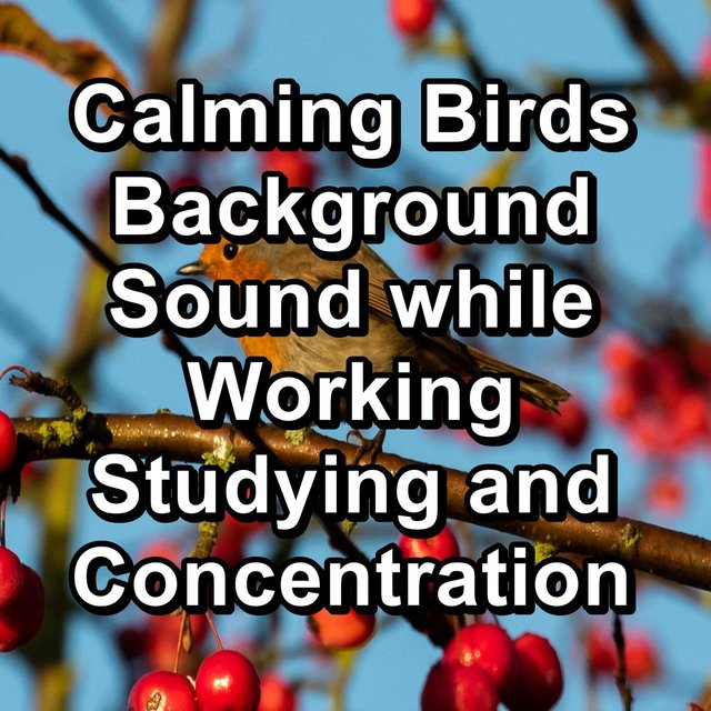 Calming Birds Background Sound while Working Studying and Concentration