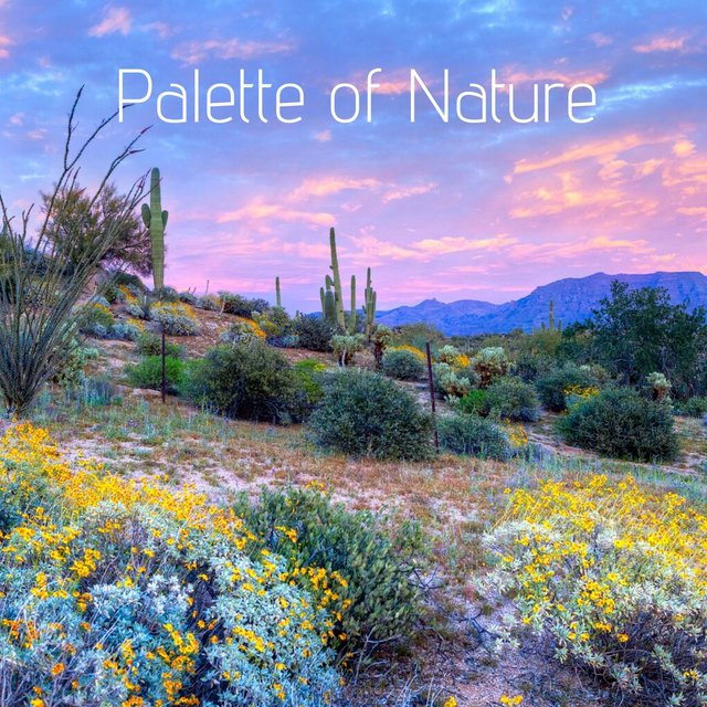 Palette of Nature