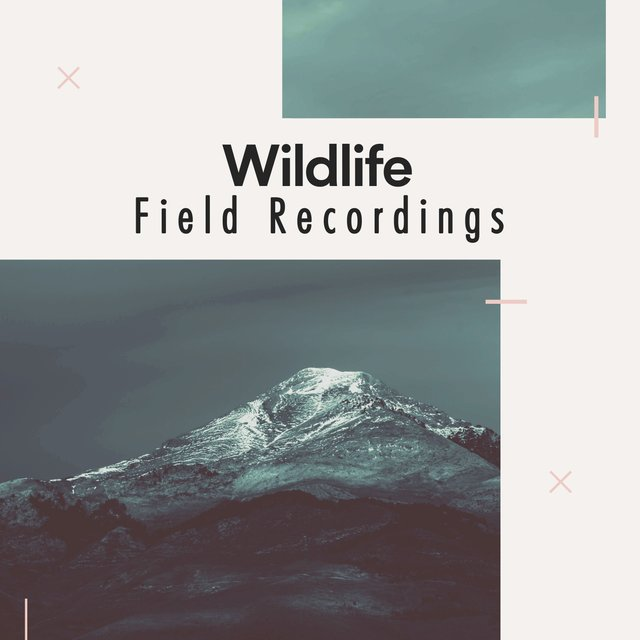 Reflective Tranquil Wildlife Field Recordings