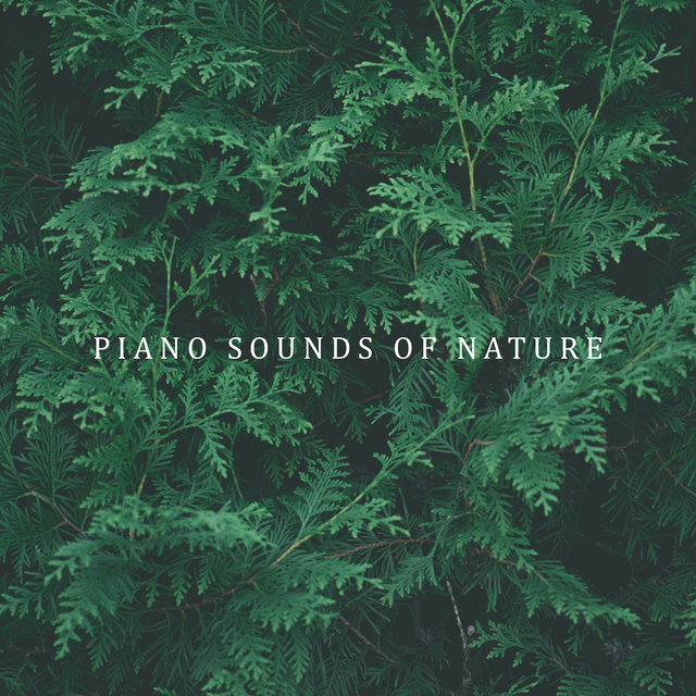 Piano Sounds of Nature