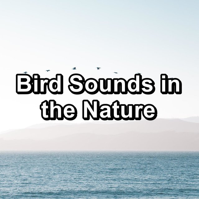 Bird Sounds in the Nature