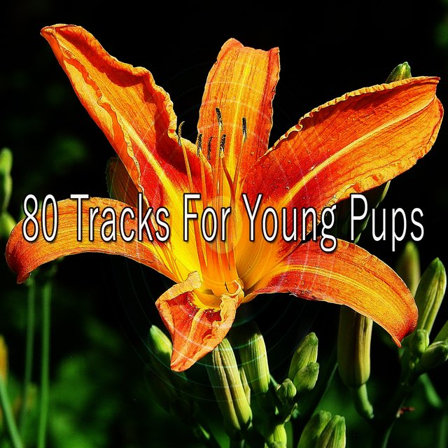 80 Tracks for Young Pups