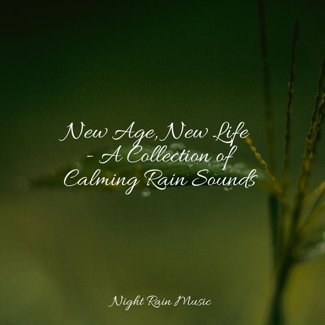New Age, New Life - A Collection of Calming Rain Sounds
