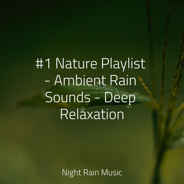 #1 Nature Playlist - Ambient Rain Sounds - Deep Relaxation