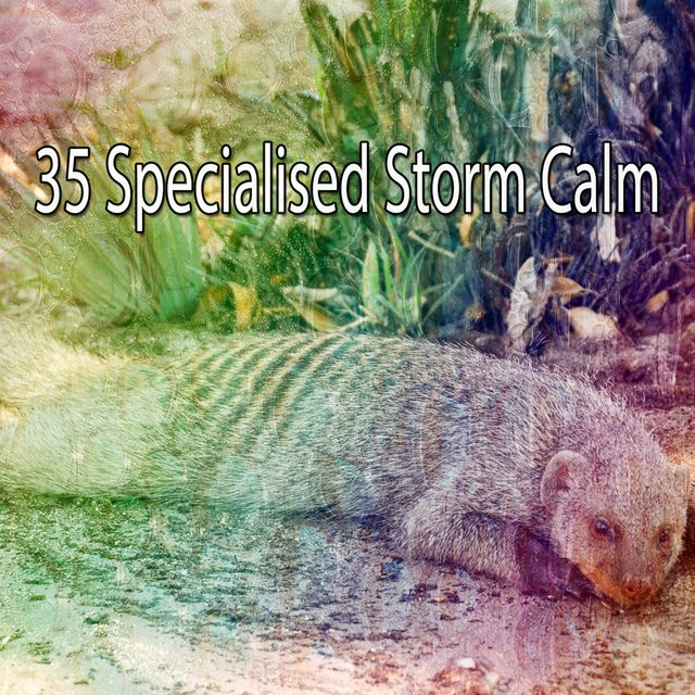 35 Specialised Storm Calm