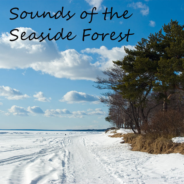 Sounds of the Seaside Forest – Beautiful Nature Melodies, Meadow, Animals, Waves, Ocean, Relaxation, Rest