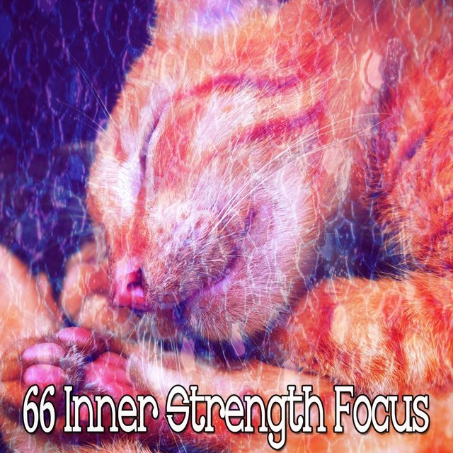 66 Inner Strength Focus