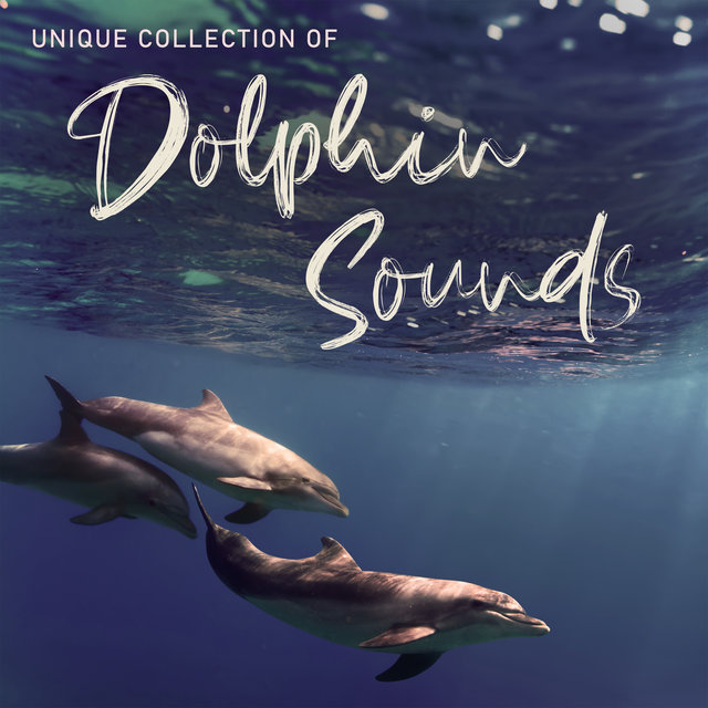 Unique Collection of Dolphin Sounds – 1 Hour of Sounds of Sea Creatures for Relaxation, Meditation, Sleep and Study