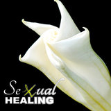 Sexual Healing (Love Making)