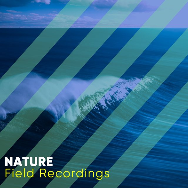 Soft Natural Nature Field Recordings