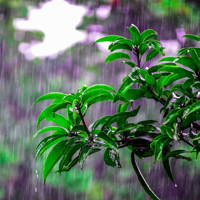 Healthy Rain Ambient for You to Relax (Loopable)