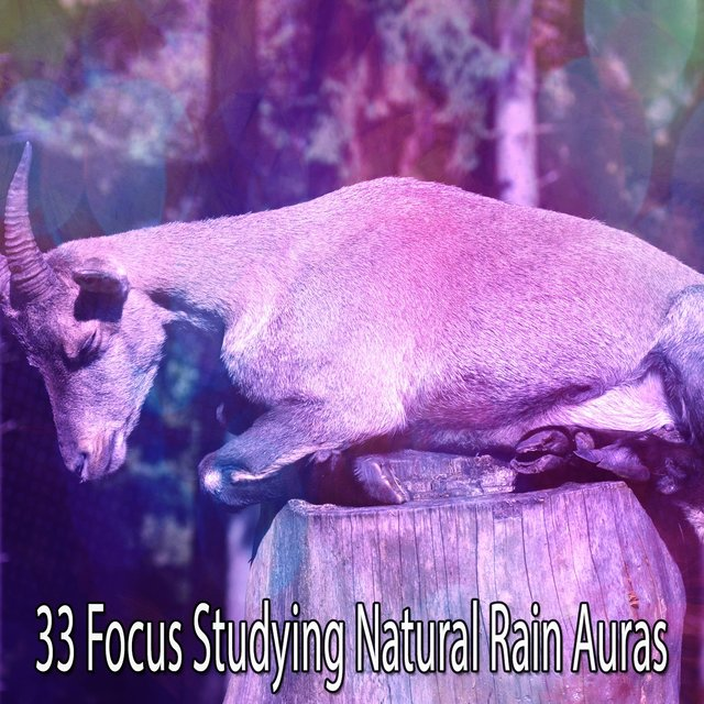 33 Focus Studying Natural Rain Auras