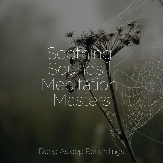 Soothing Sounds | Meditation Masters