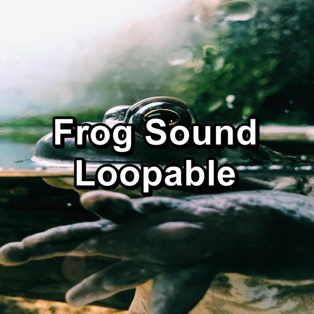 Frog Sound Loopable