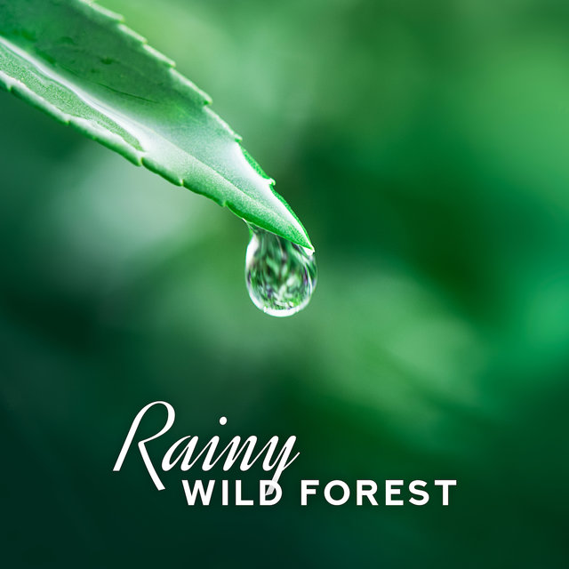 Rainy Wild Forest: Relaxing Music for Spa, Music for Massage, Nature Melodies, Singing Birds, Waterscapes, Sleeping and Wellness