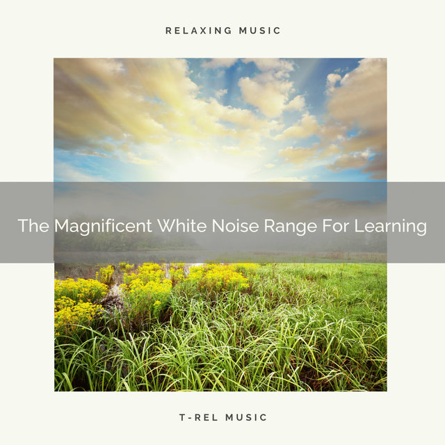 The Magnificent White Noise Range For Learning