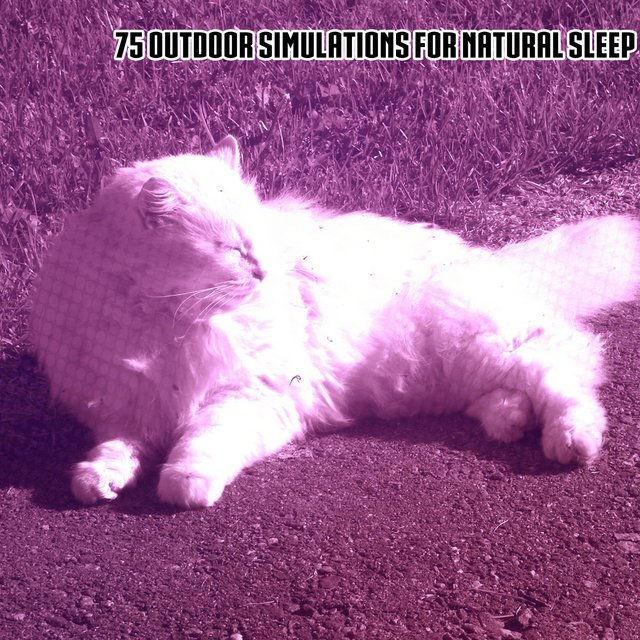 75 Outdoor Simulations For Natural Sleep