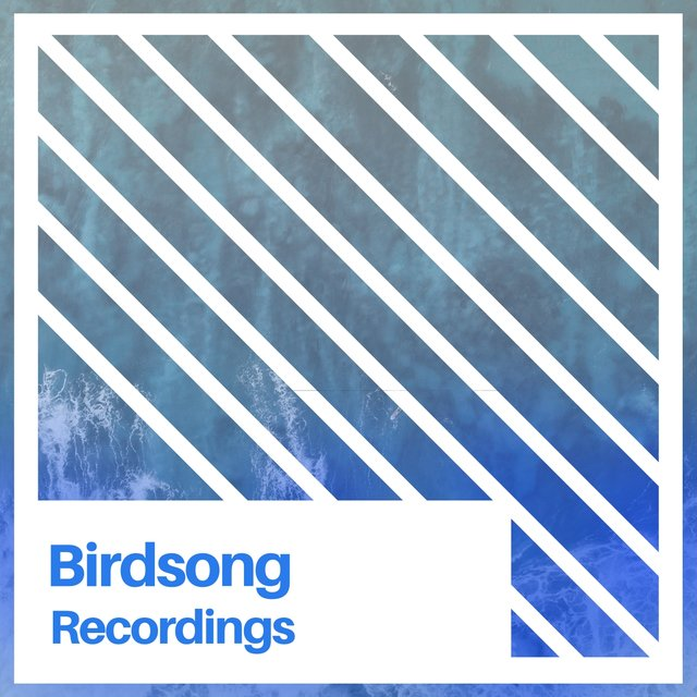 Relaxing Natural Birdsong Recordings