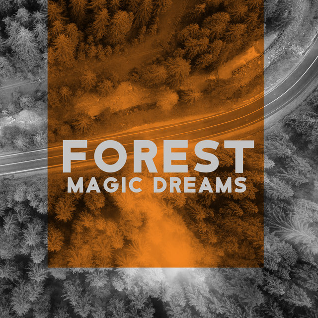 Forest Magic Dreams