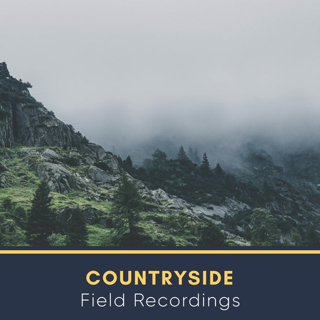 Gentle Rustic Countryside Field Recordings