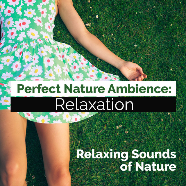 Perfect Nature Ambience: Relaxation
