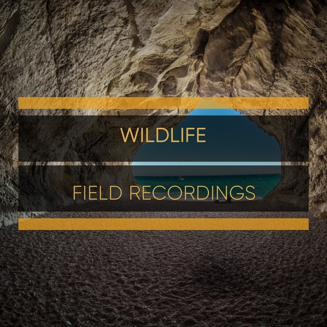 Flowing Rustic Wildlife Field Recordings