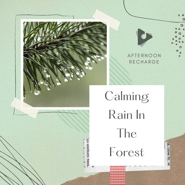 Calming Rain In The Forest