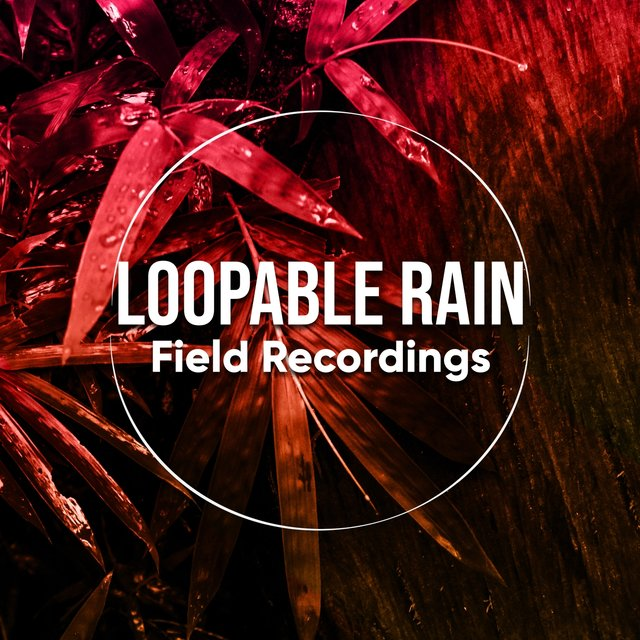 2020 Background Loopable Rain & Water Field Recordings