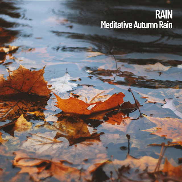Rain: Meditative Autumn Rain
