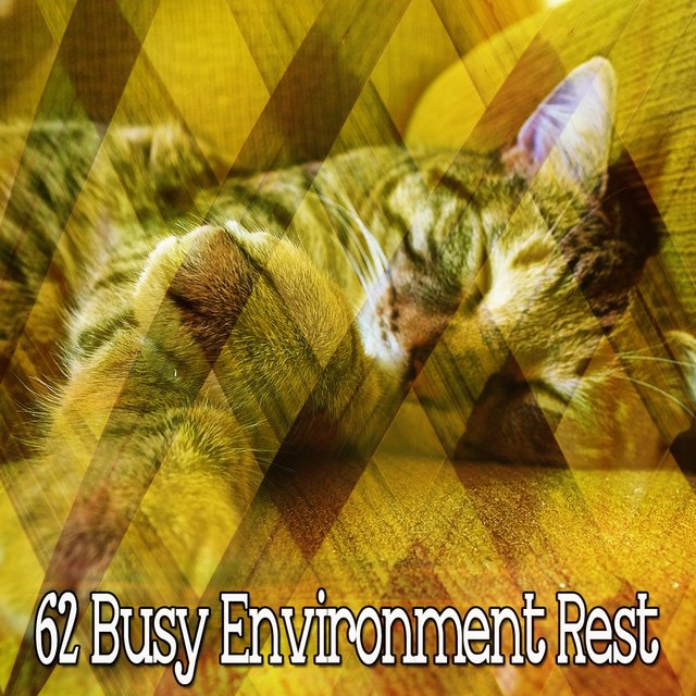62 Busy Environment Rest