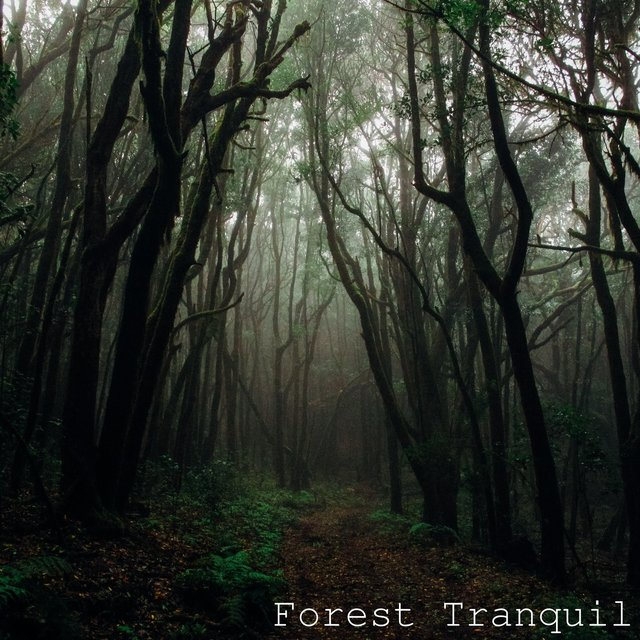 Forest Tranquil