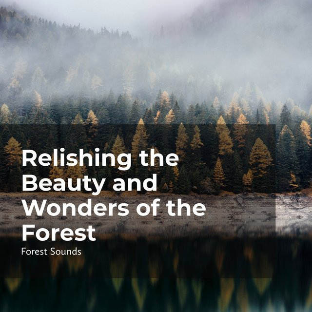 Relishing the Beauty and Wonders of the Forest
