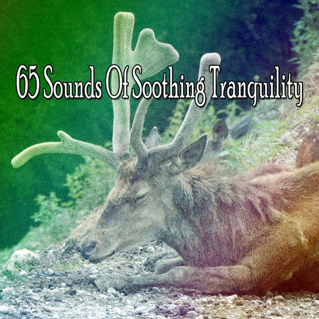 65 Sounds of Soothing Tranquility