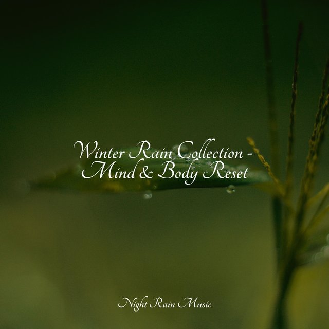 Winter Rain Collection - Mind & Body Reset