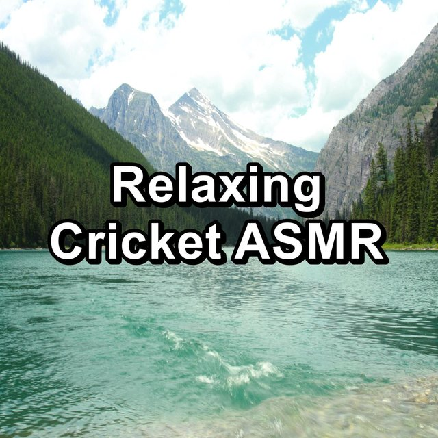 Relaxing Cricket ASMR