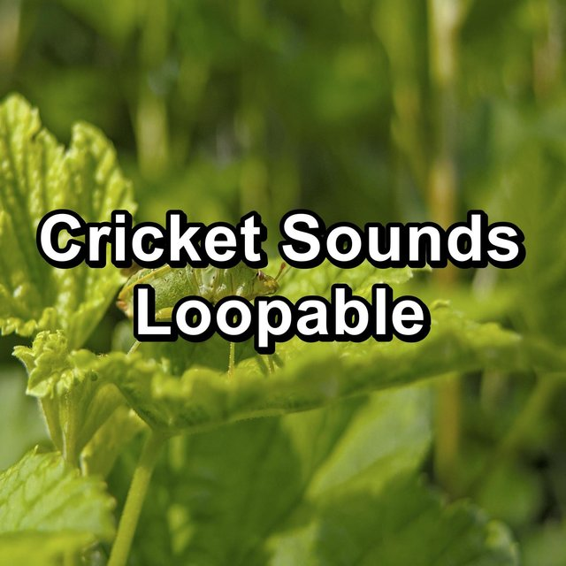Cricket Sounds Loopable