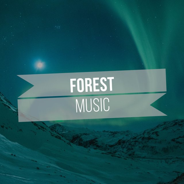 Background Native Forest Music