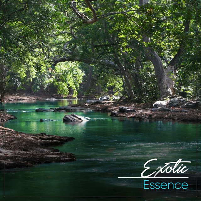 # 1 A 2019 Album: Exotic Essence
