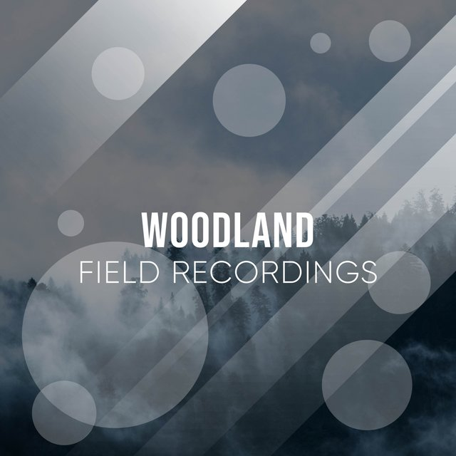 Calm Tranquil Woodland Field Recordings